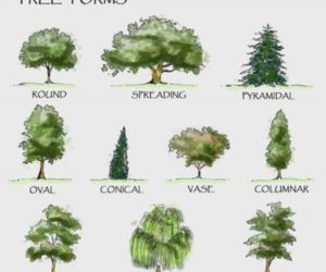 Introduction to Dendrology
