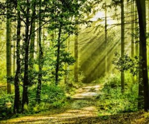 "According To Science, Japanese ""Forest Bathing"" Can Improve Your Health"