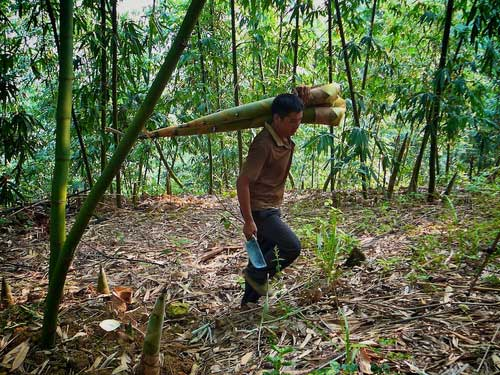 A Technology Revolution To Curb Illegal Logging