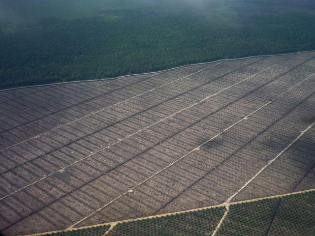When a Tree Falls, Is It Deforestation?
