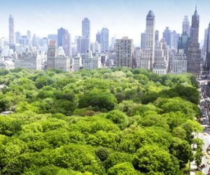 Trouble for Trees in Cities