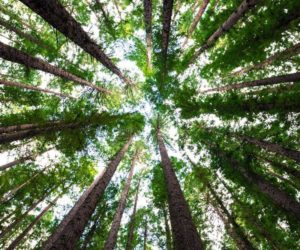 Regional Forest Practice committees to meet in October