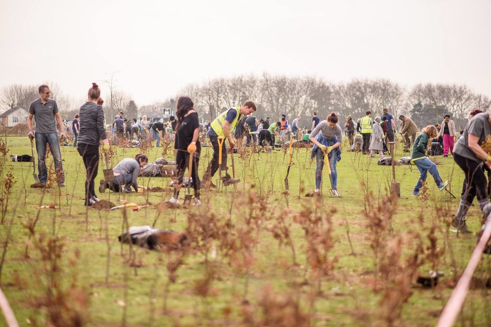 Help us plant 25,000 trees in London!